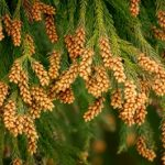 5月の花粉症 関東で原因となる植物の写真 対策方法は!?